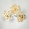 Handmade Dia Dry Flower
